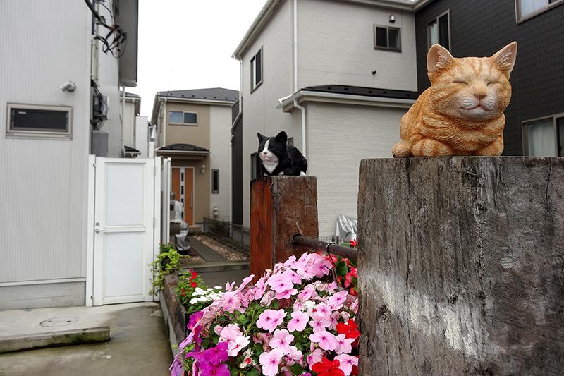 駐車場で猫がお出迎え